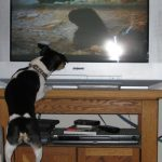 "Henry really enjoyed the apes in ""2001: A Space Odyssey"" (12 Mar 2012)"