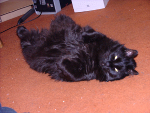Lestat Relaxing on the (Dirty) Floor (24 May 2010)