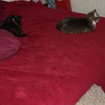 Lestat and Plinka (05 Feb 2011)