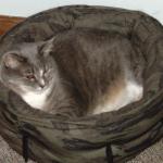 Plinka in Lestat's old bed. (25 March 2011)