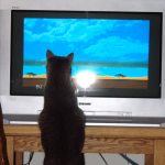 Plinka watching Animal Atlas. (25 Feb 2011)
