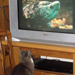 Plinka watching television. (25 Feb 2011)